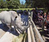 Orana rhino feed