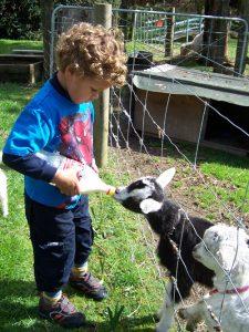 Whiti Farm 2