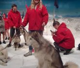 Antarctic Centre HUSKY ZONE