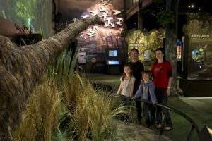 Life size Moa at ZEALANDIA Exhibition Photo Credit - ZEALANDIA
