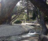Queenstown trees