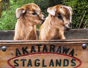 Family Pass to Staglands Wildlife Reserve and Cafe, Upper Hutt Kids On Board