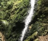 percys-scenic-reserve