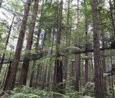 treetops-walk-rotorua