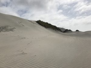 Wharariki sand dunes