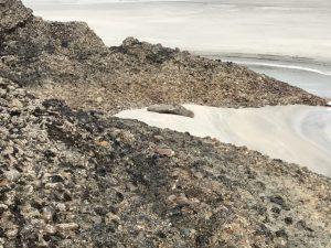 Wharariki seal