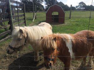 Woodlands ponies