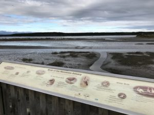 Foxton Beach wetlands walk