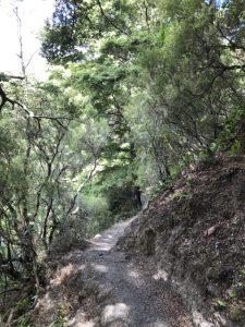 Bush walk Patuna