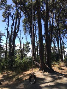 Forest Walk and Rope Swing, Otaki Kids On Board