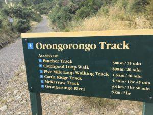 Orongorongo walks