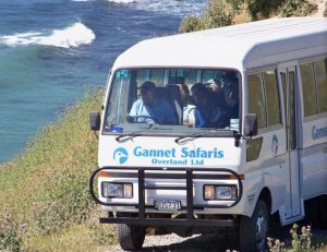 Gannet Safaris Overland, Te Awanga Kids On Board